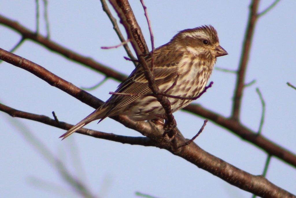 A New Bird – Tammie Rogers